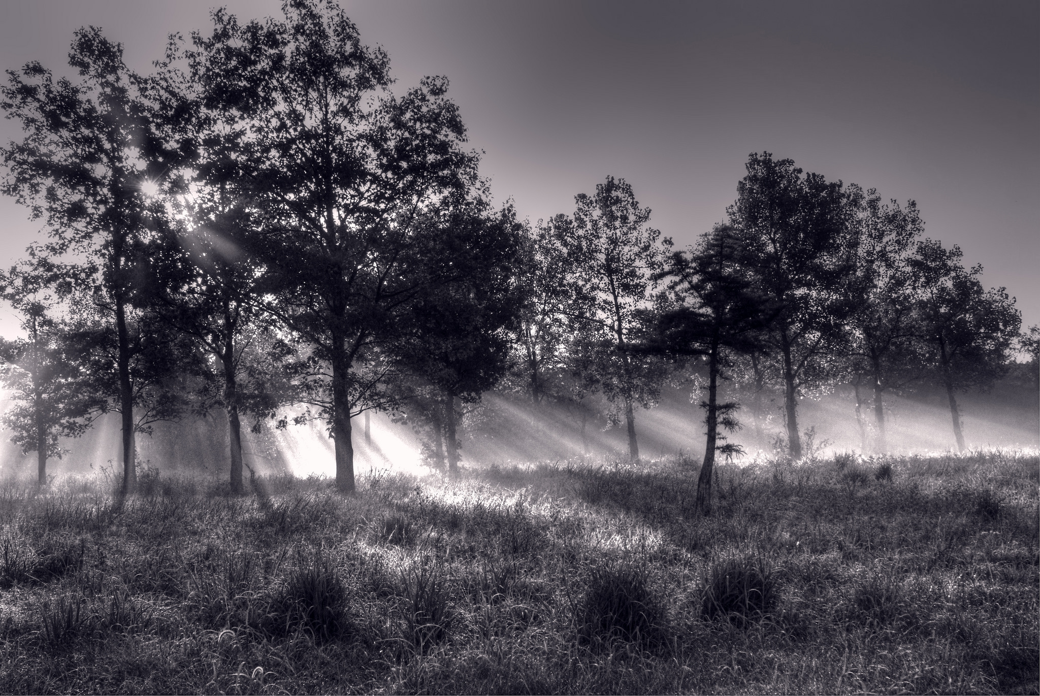 Sunbeam Nature Forest Black Amp White 2048x1371