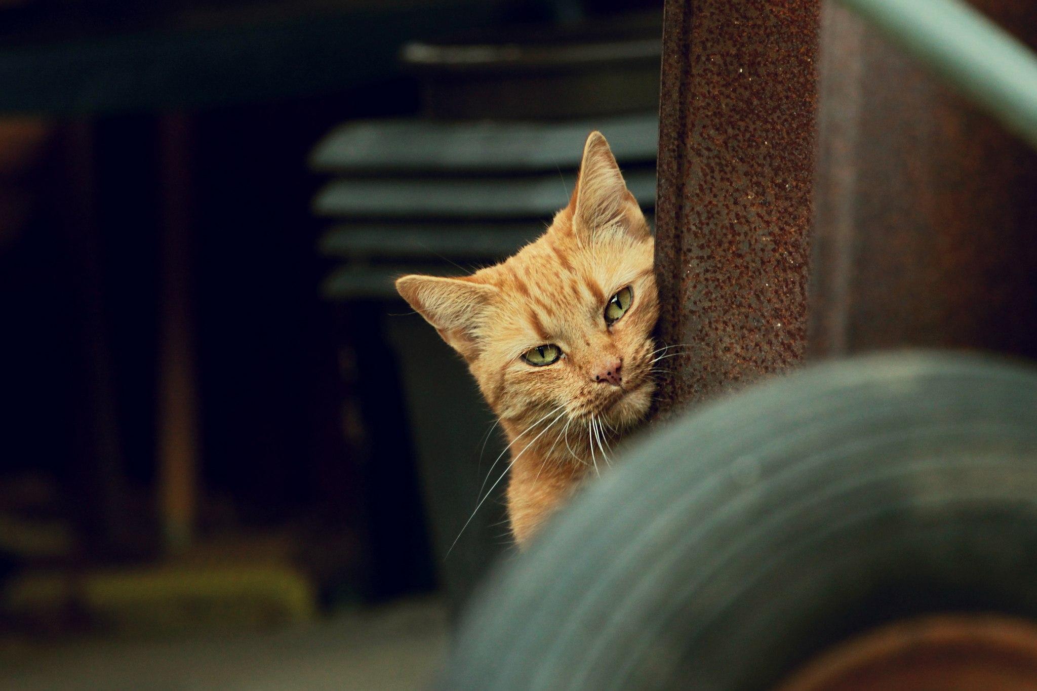 Animal Cat 2048x1365