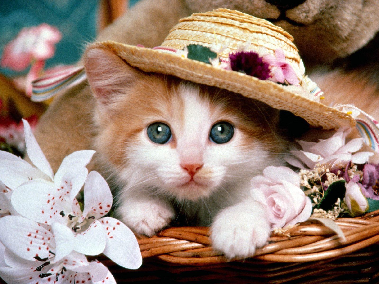 Cat Kitten Hat Flower Teddy Bear Cute Pet 1600x1200