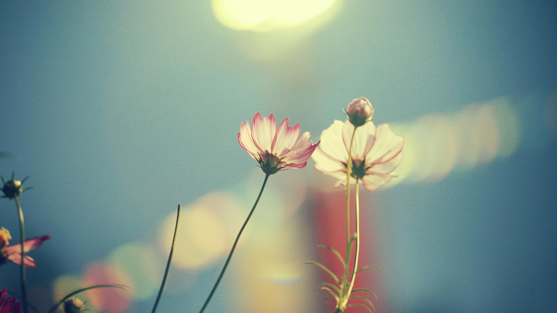 Earth Flower 1920x1080