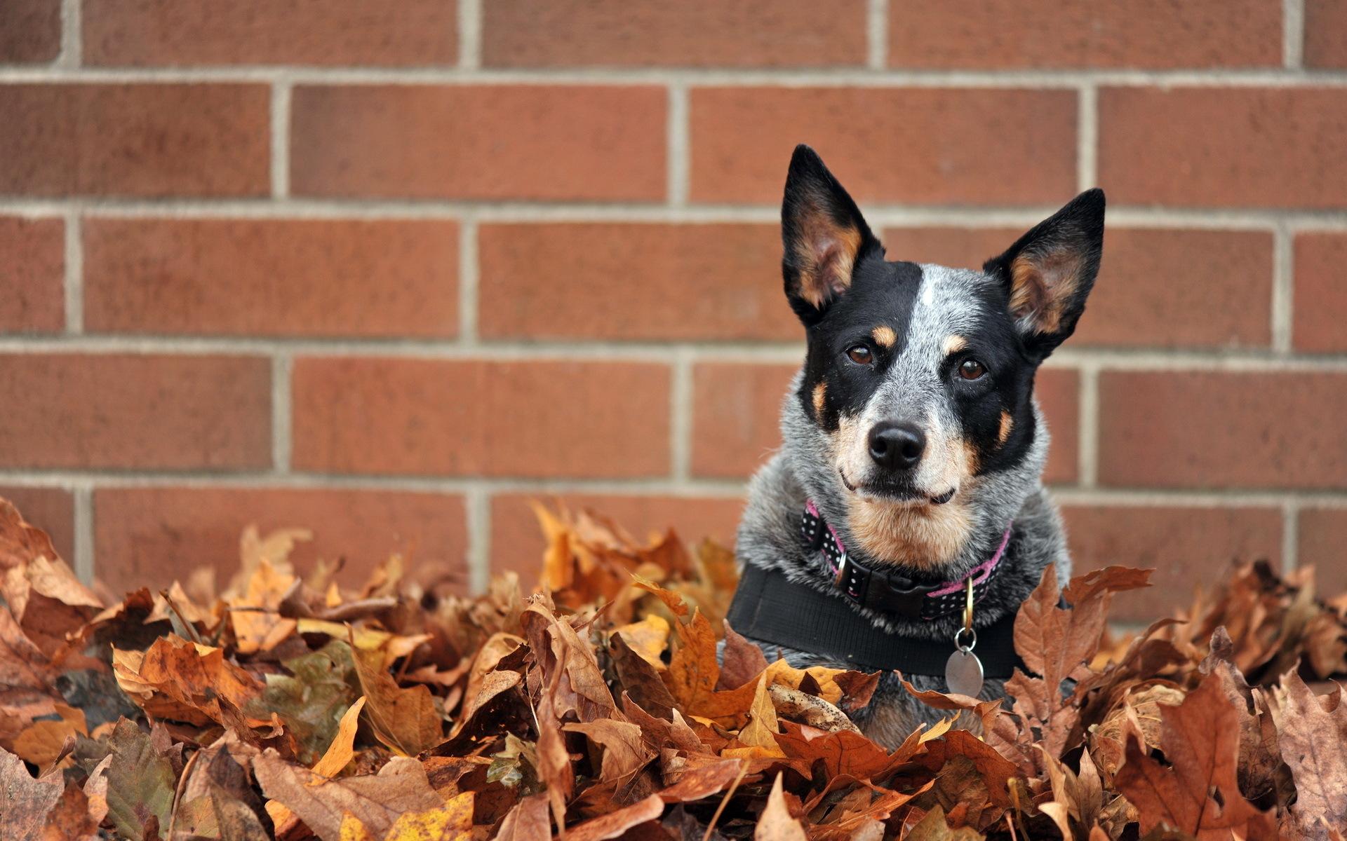 Dog Leaf 1920x1200