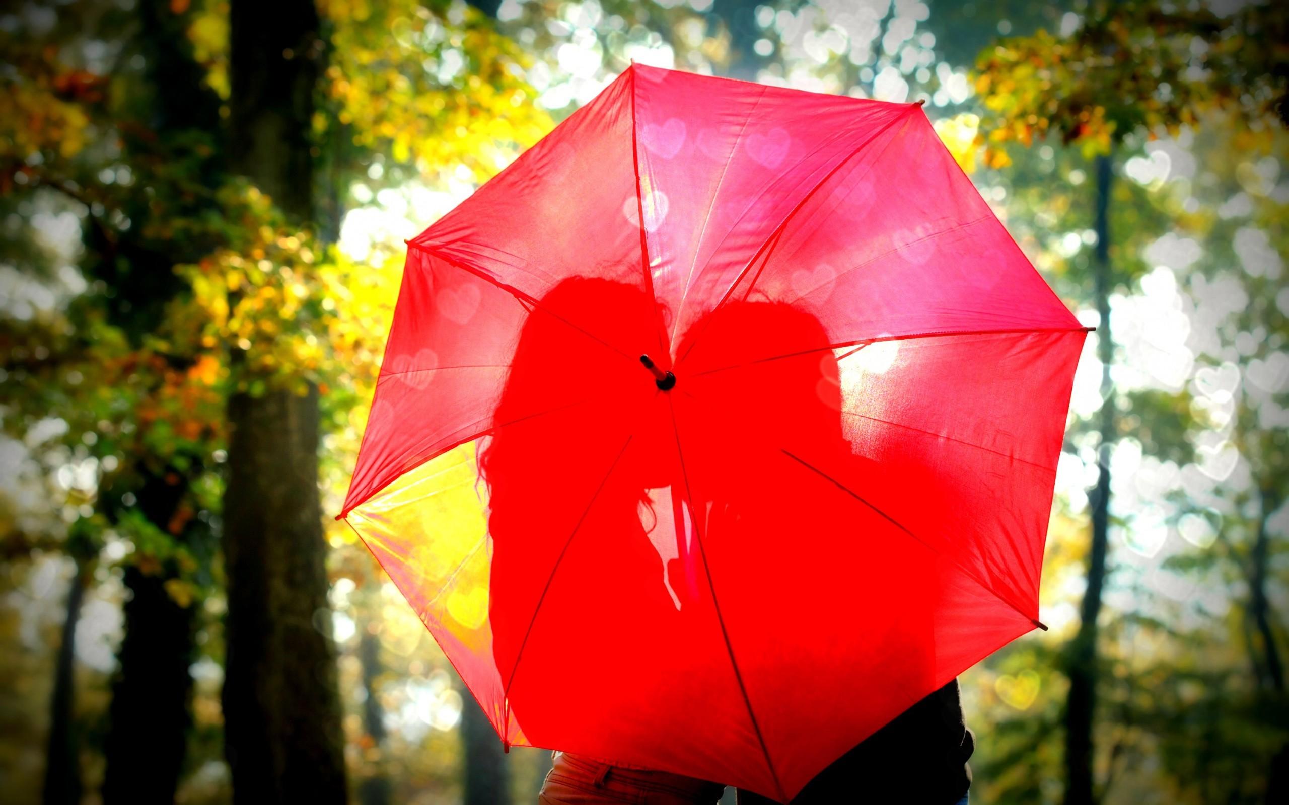 Photography Umbrella 2560x1600