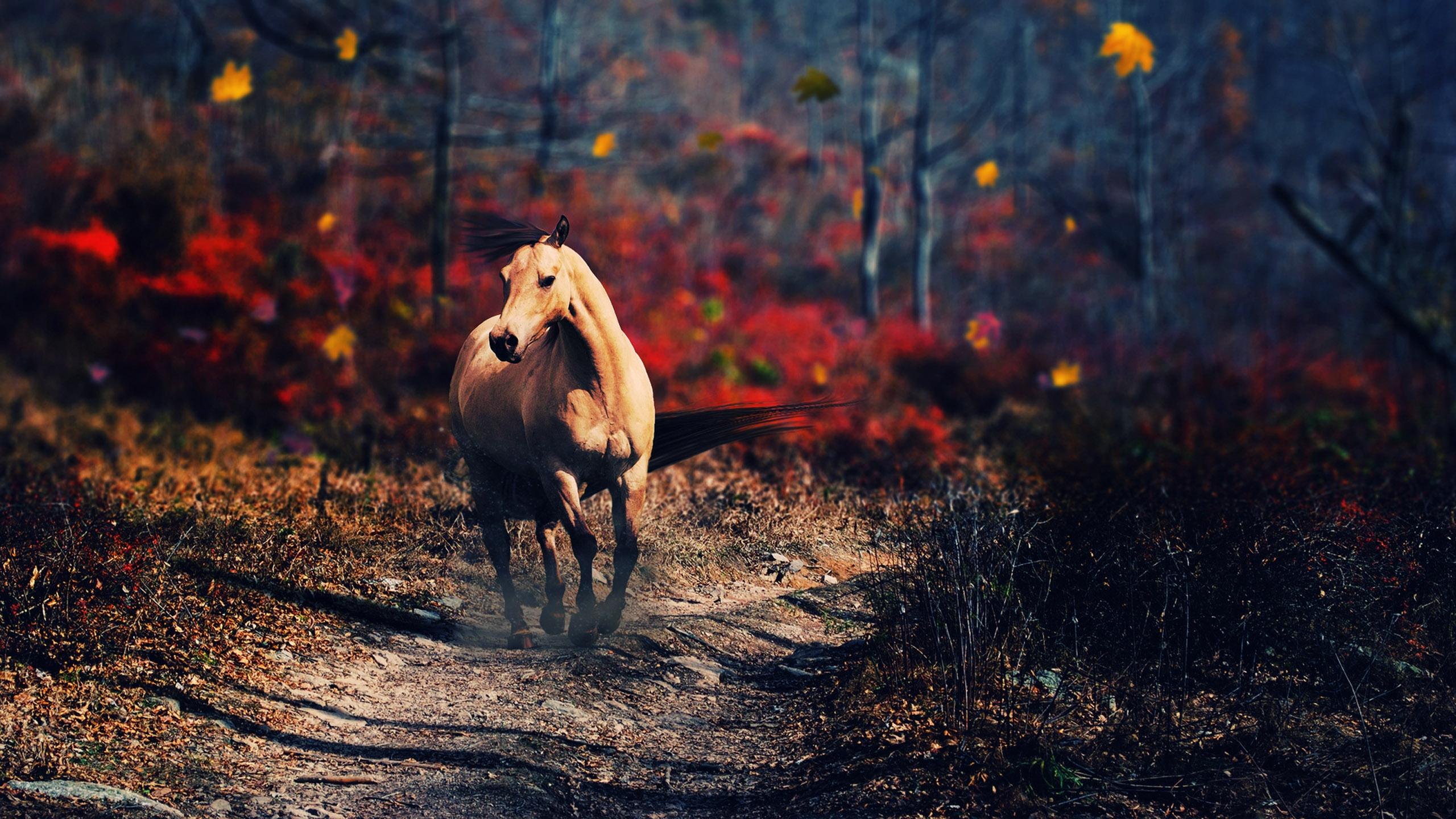 Animal Horse 2560x1440