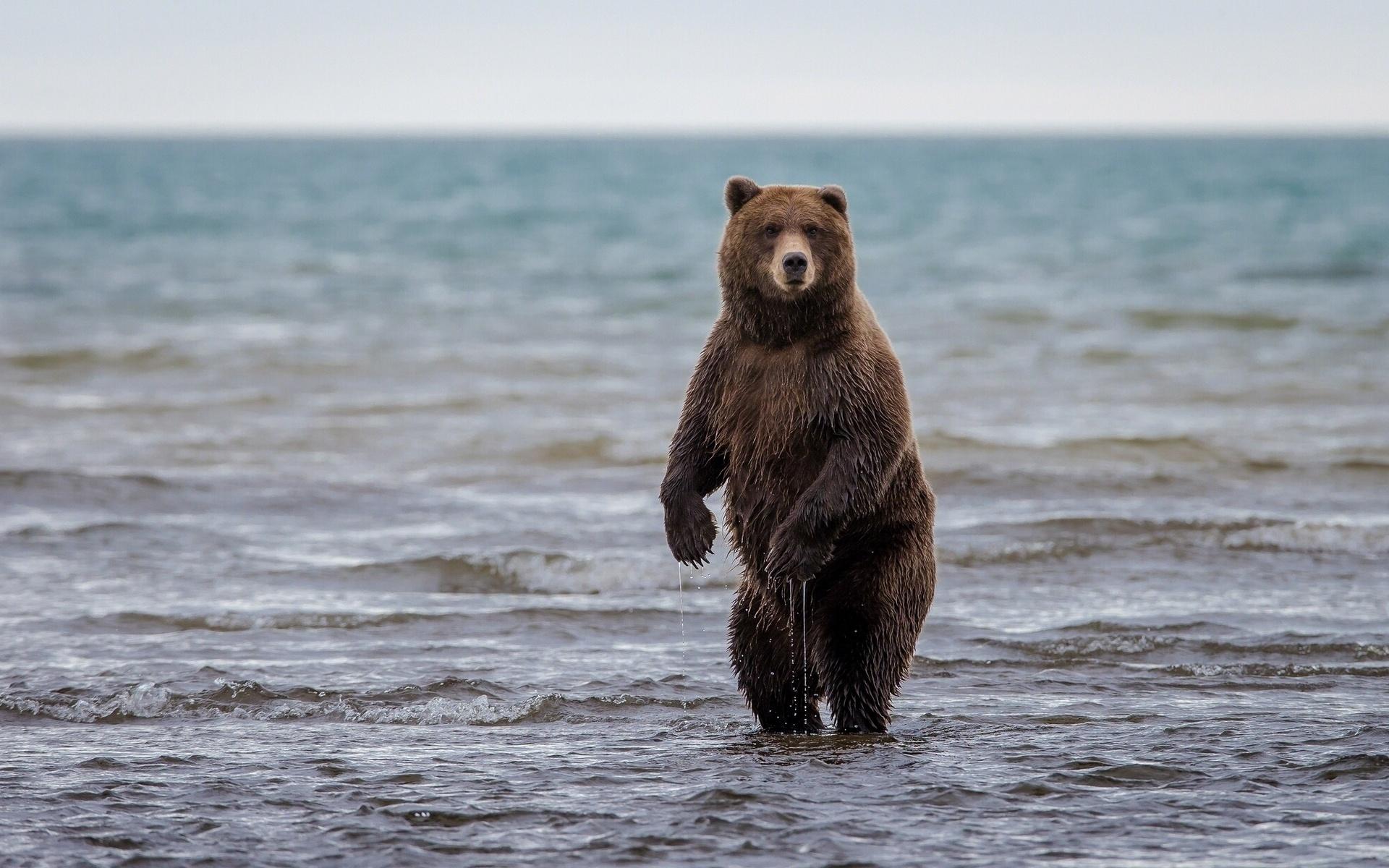 Animal Bear 1920x1200