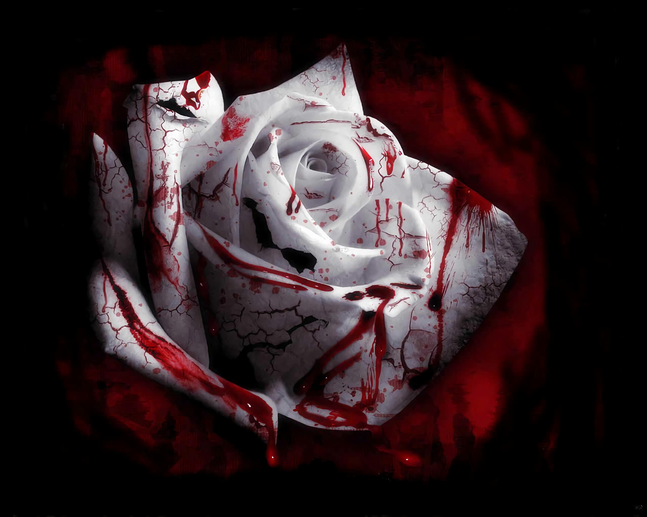 Blood Flower Rose White Flower White Rose 2560x2048