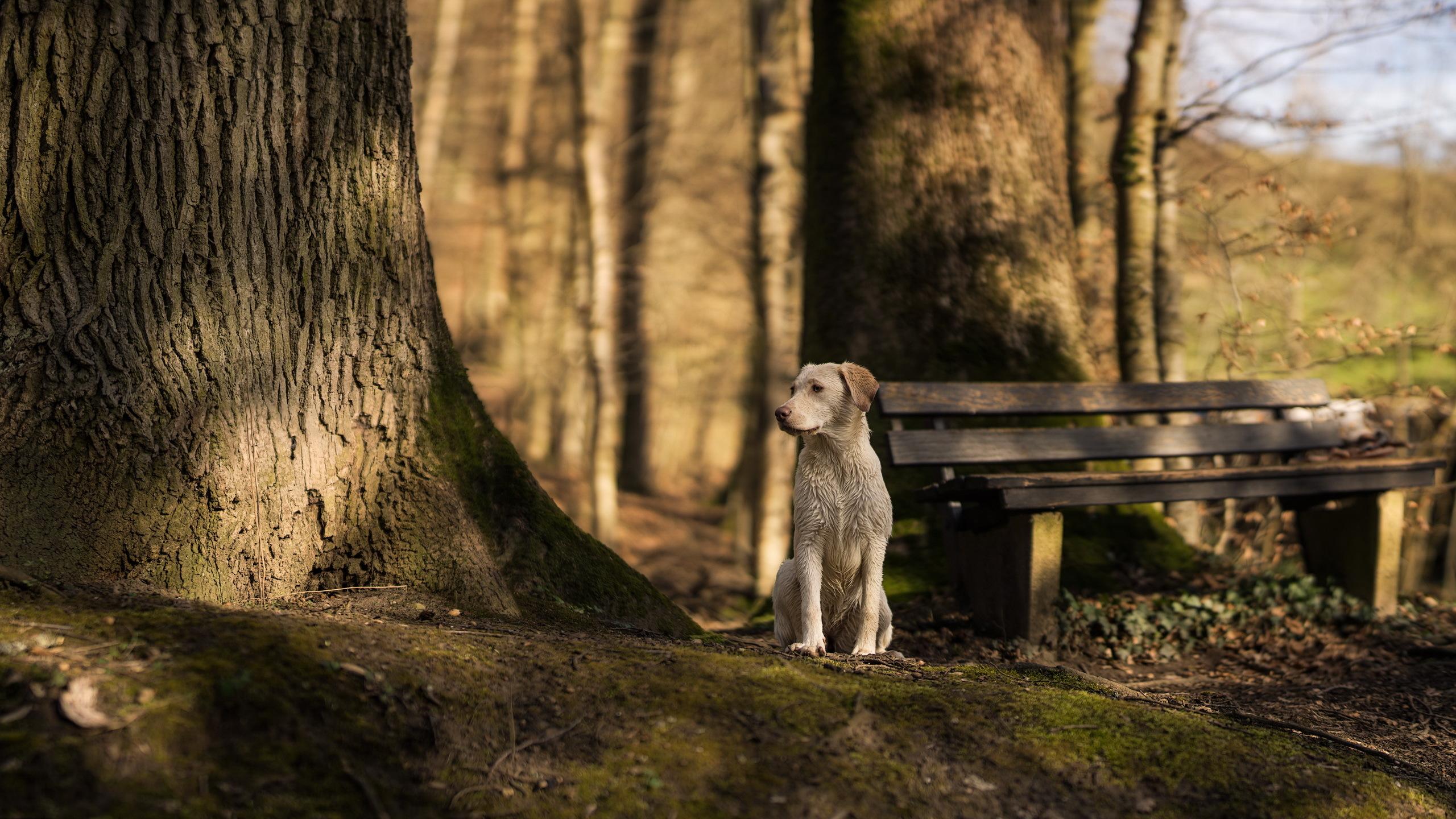 Animal Bench Dog 2560x1440