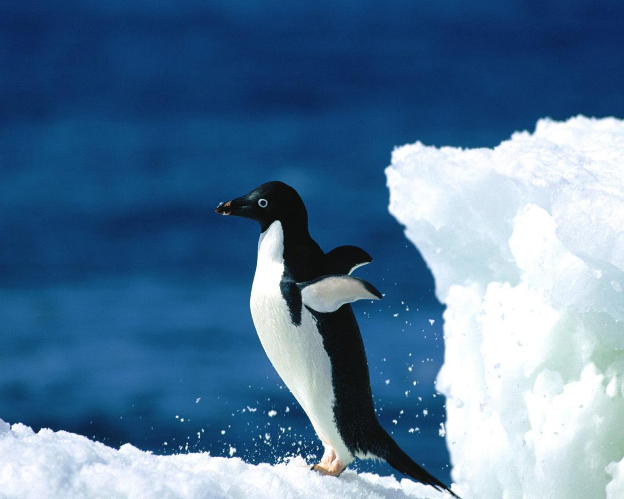 Bird Penguin 1280x1024