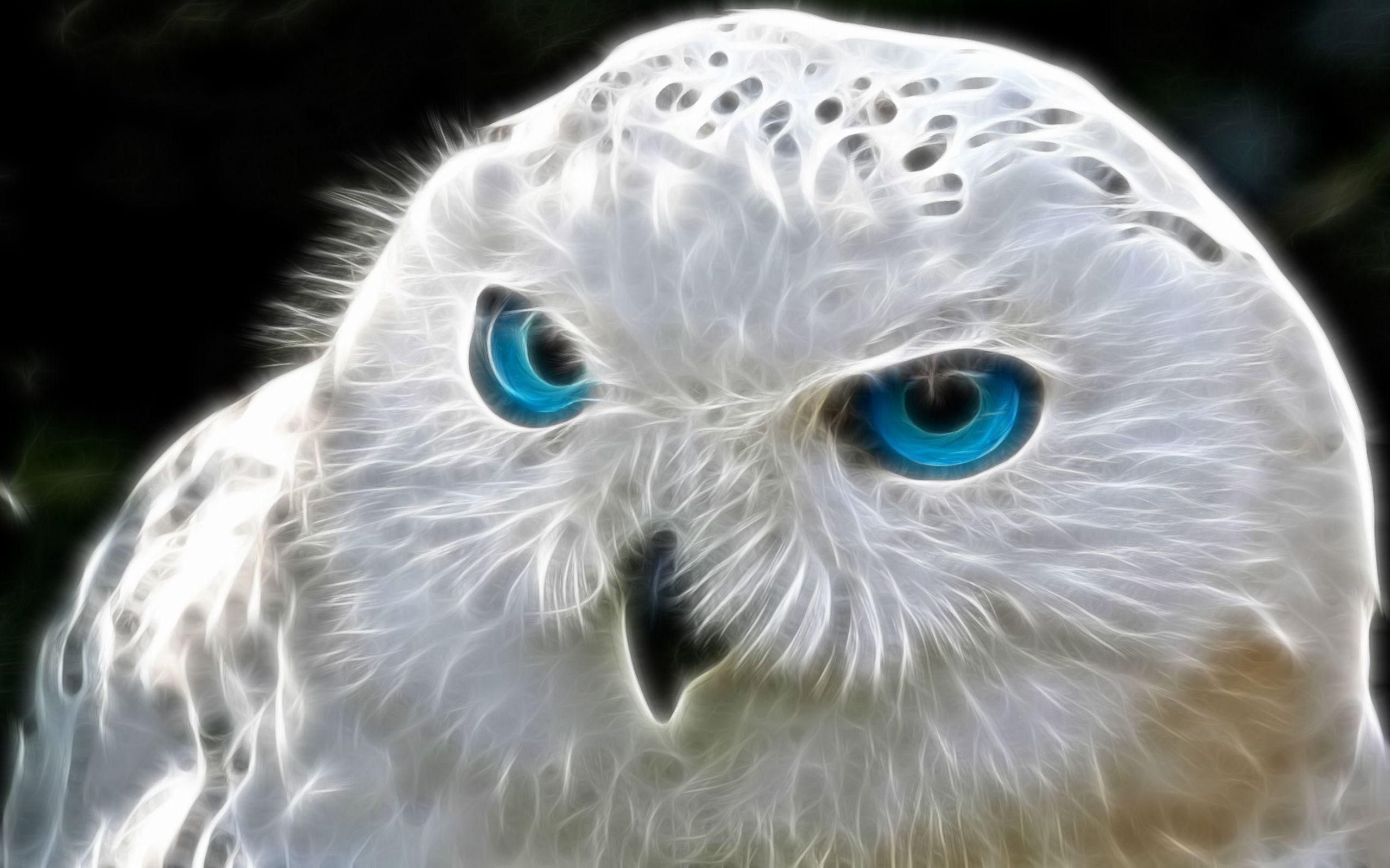Digital Art Eye Owl White 2560x1600