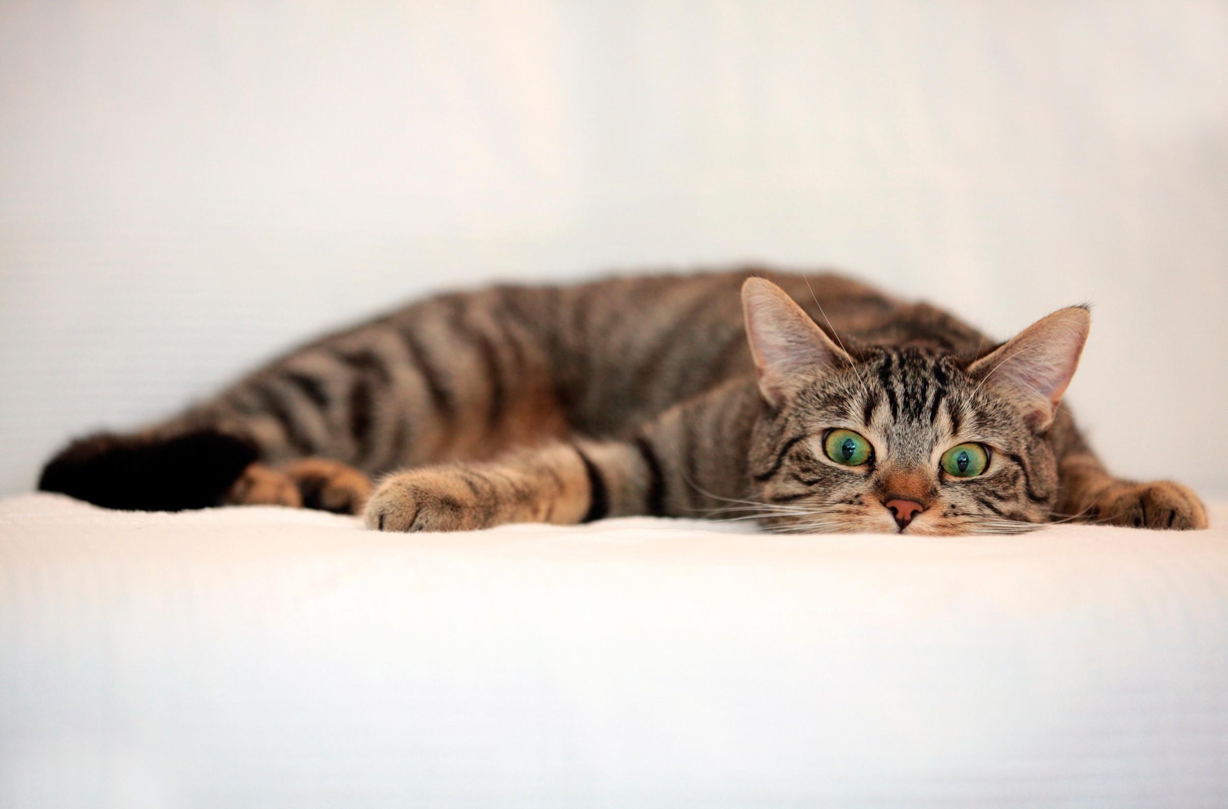Cat Funny Pet 2500x1647