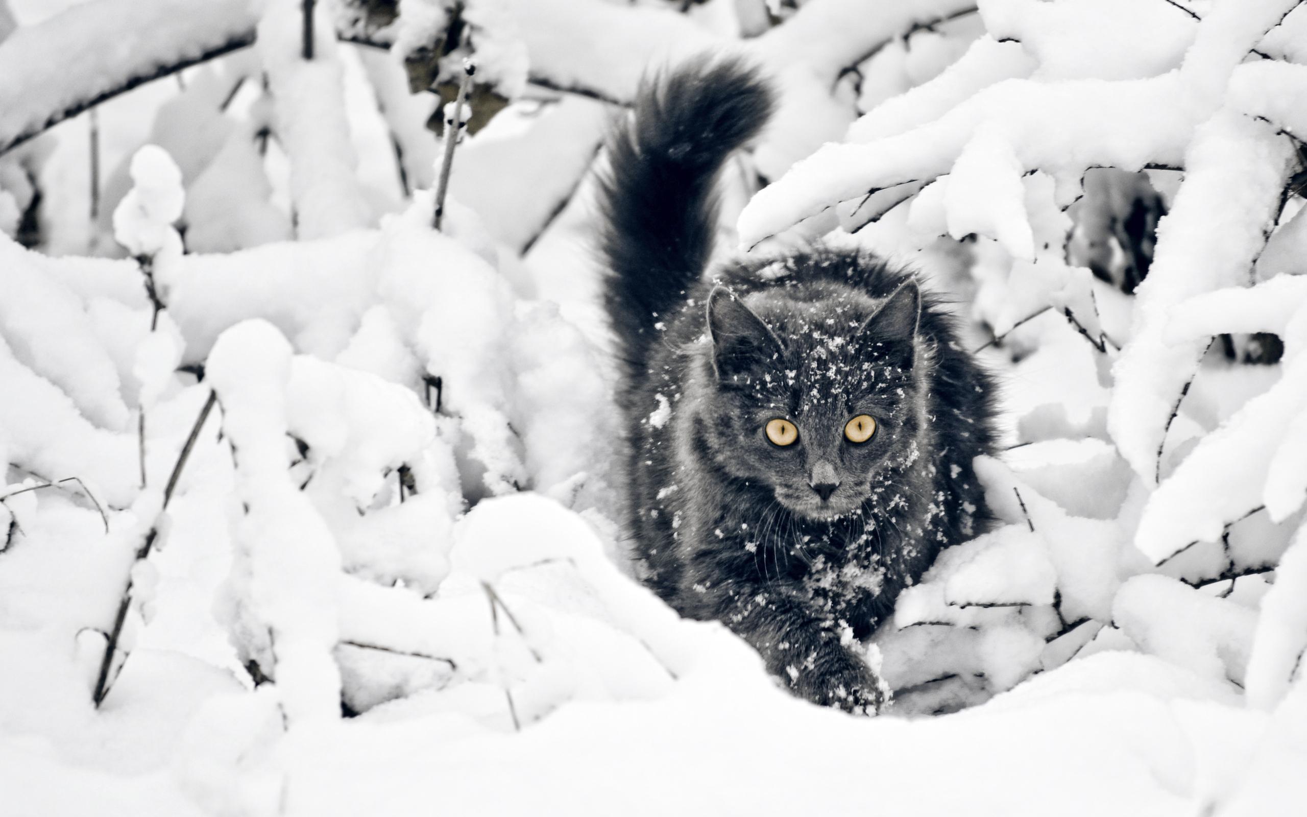 Animal Cat 2560x1600