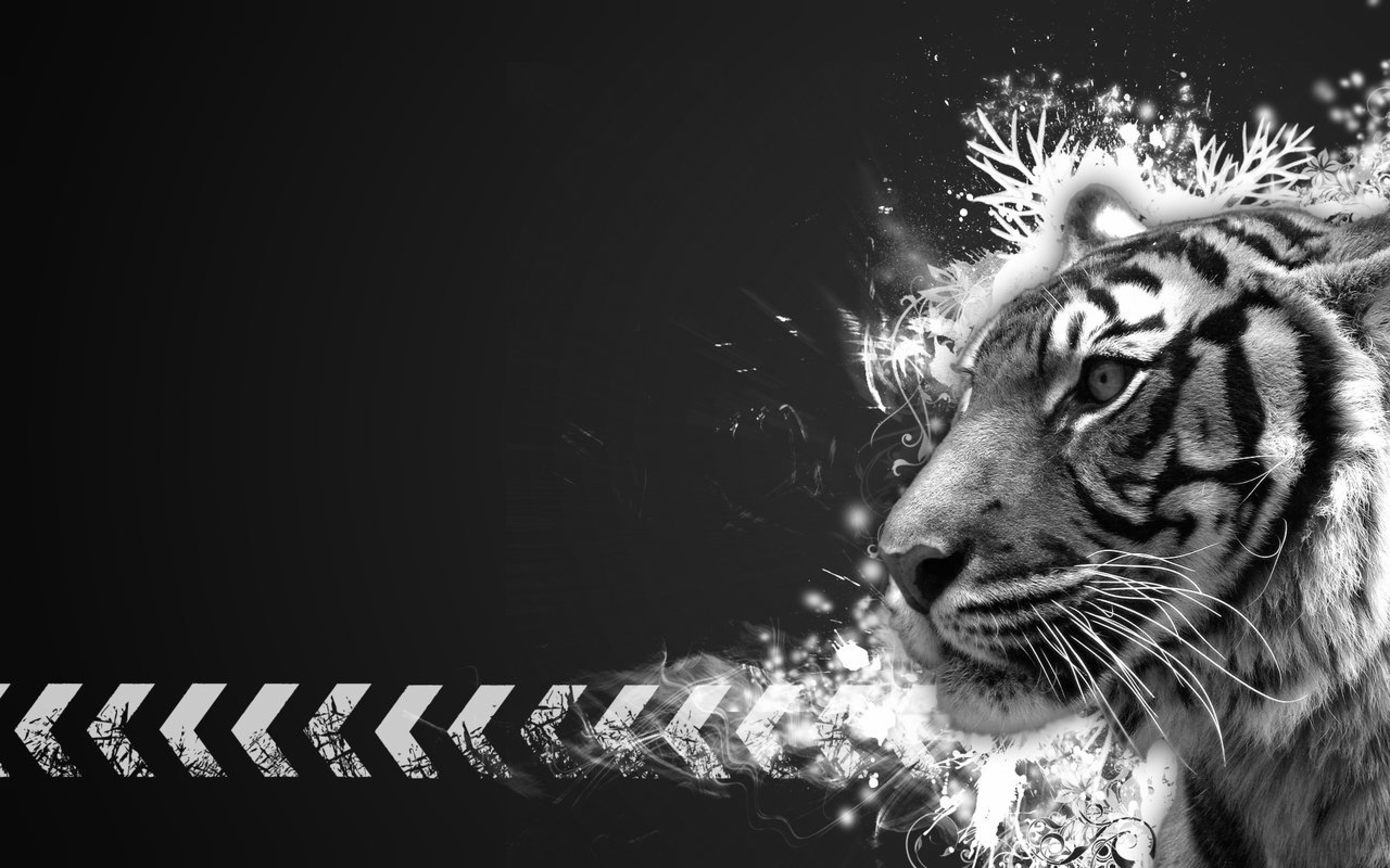 Animal Tiger 2560x1600