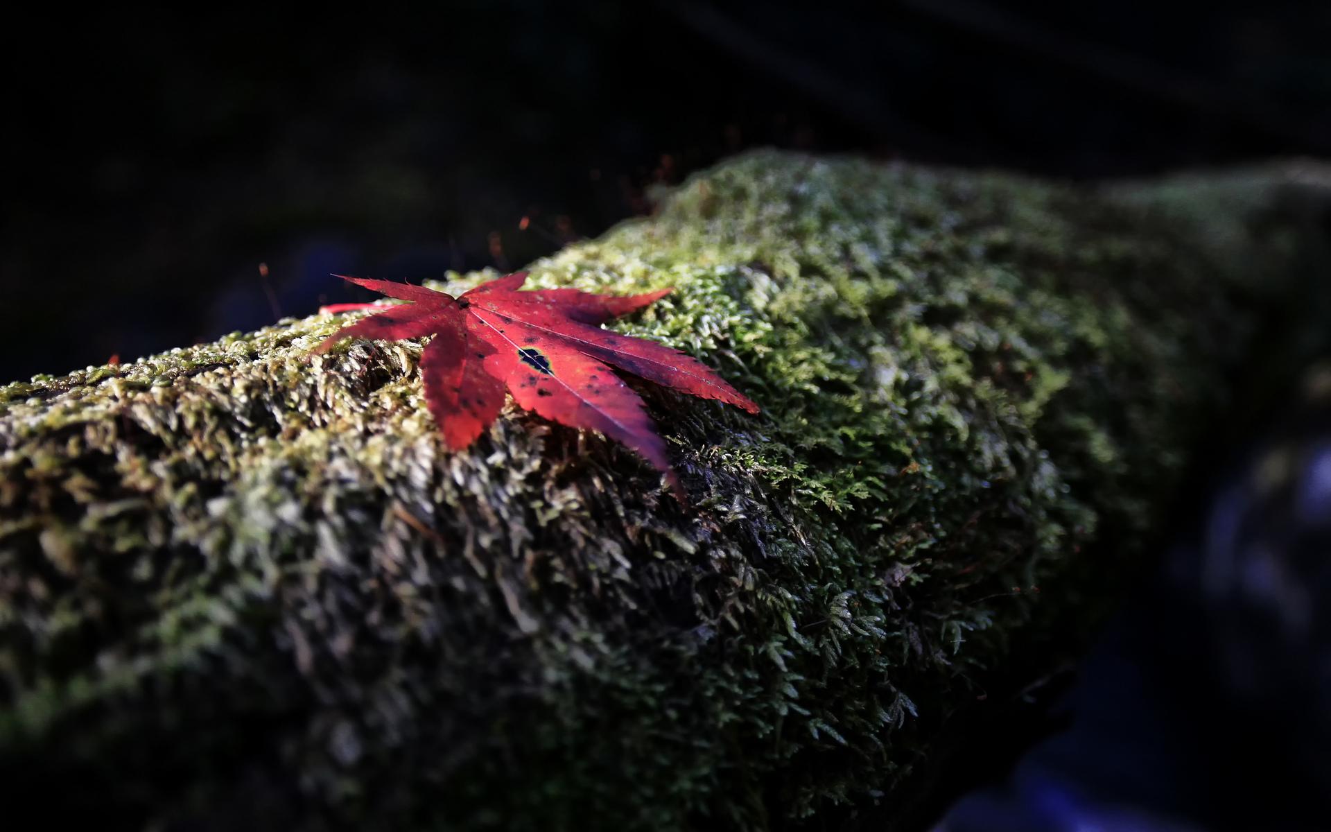 Earth Leaf 1920x1200